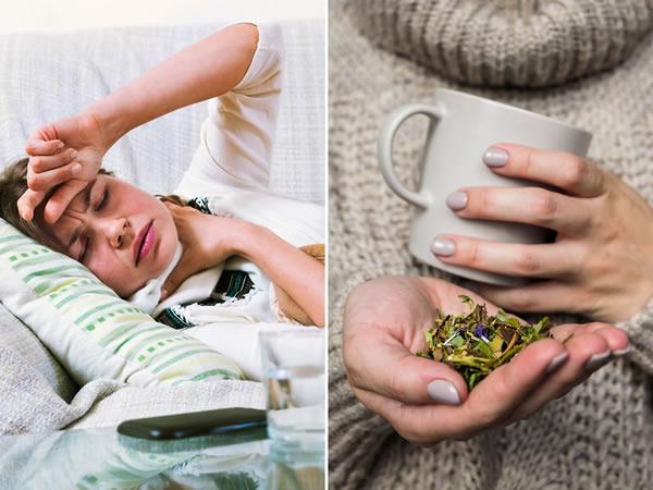 Peršalimo gydymas žolelėmis
